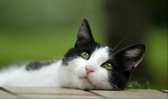 小猫咪的简单名字大全
