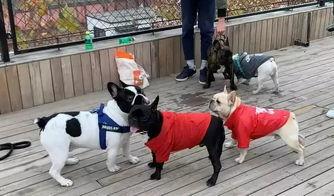 多地出台养犬新政