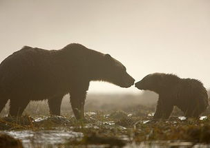 动物世界的母子情深