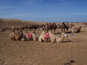 都市骆驼品牌