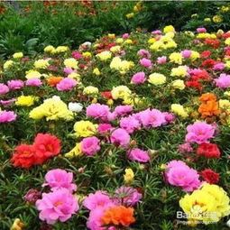 夏季适合养什么花懒人养花必备