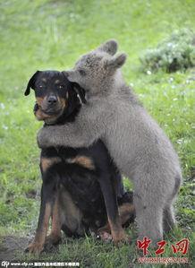 动物世界跨种族交情