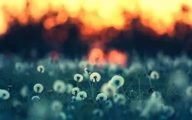 意境美 追梦的人总想驰骋在未来的远方,面对心的漂泊