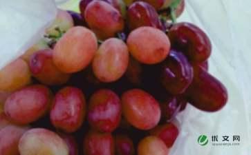 我喜爱的水果桃子优秀范文