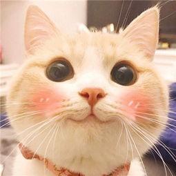 当猫咪暴躁起来......