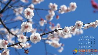 描写春天的梅花_梅花春天的样子描写