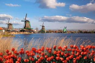 荷蘭哪些大學用荷蘭語