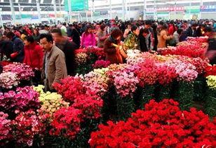 中国各地的花卉批发市场有哪些