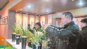 2014中国大理第七届国际兰花茶花博览会大理开展