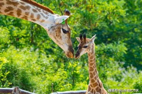济南野生动物世界3月20日恢复开放室内项目暂缓开放