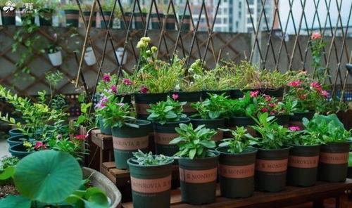 顶楼带露台的房子最适合养花吗