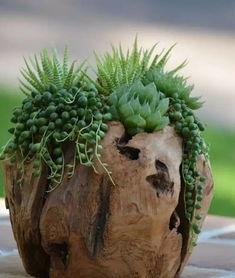 苔藓树桩养花