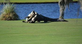 美国两巨鳄高尔夫球场 厮杀 场面震撼
