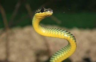 蛇多的地方風水好不好