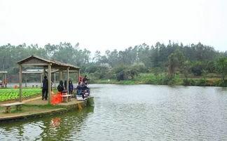 佛山农家乐可以可以钓鱼的