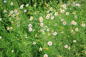 怀孕了能养花吗