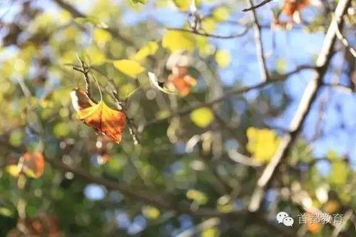 有关于秋天校园的唯美诗句