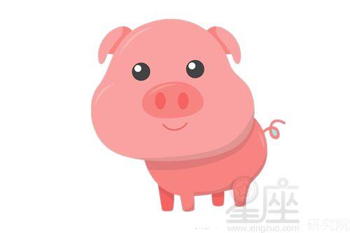 属猪的今年的财运(属猪人一生的财运、命运)