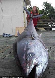 老人长江里钓起鱼王 盘点被人类活捉的罕见大鱼