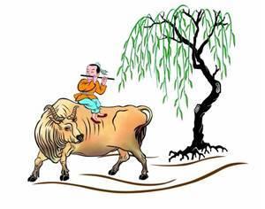 形容老牛难教的谚语