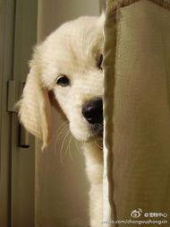 世界最快乐的狗狗 2002年,坎迪斯9岁时,父亲送给她一条名叫查姆普的金毛猎犬 她13岁时,父亲给她买了个数码相机,她便开始给 查姆普 拍照 如今父亲已经过世,但通过这只 世界最 hao123网址导航