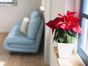 二、卧室摆放植物,夫妻和睦。