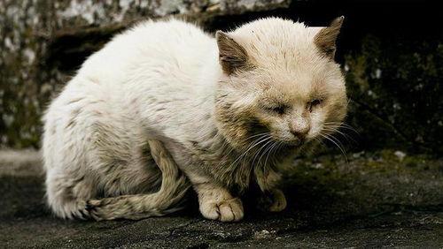 这个礼拜弄死两只猫了虐杀动物卖视频形成地下产业链