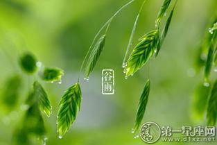 谷雨是什么季节(谷雨什么时间几点几分)