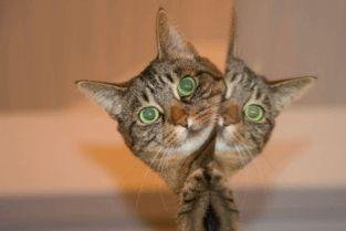 好听的小猫英文名字