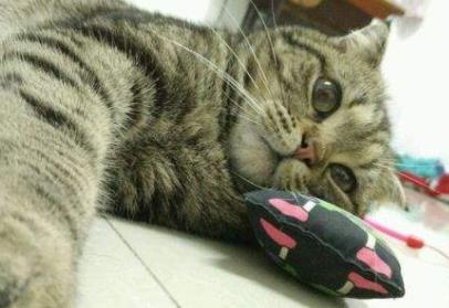 家里养猫对风水好吗(为何有养猫,会带来家里带来财运的说法,有何依据