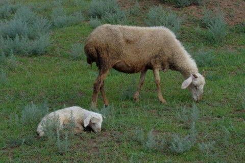 1943年肖羊的属什么命(1943年肖羊的属什么命)