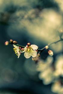 关于花与雨的诗句