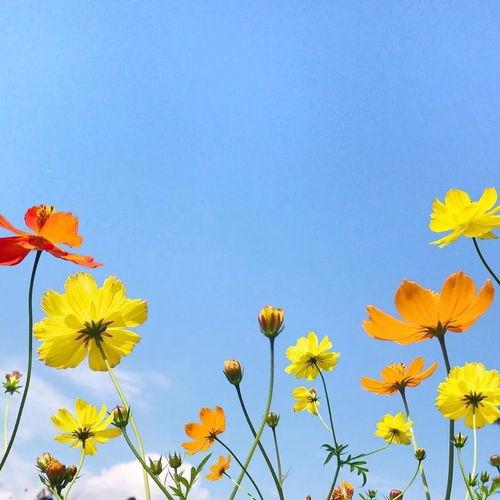 微信头像风景或花草