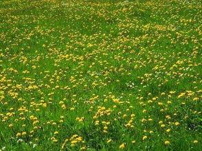 关于小草春天的诗句古诗