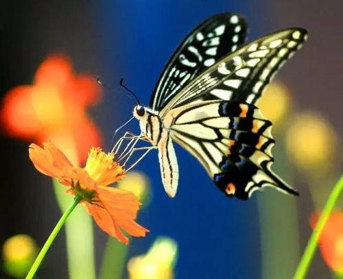 与蝴蝶有关的诗词国外