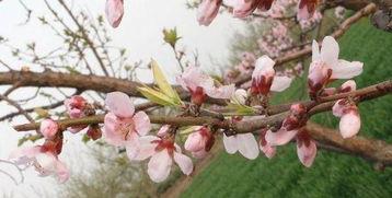 形容春天气息的句子