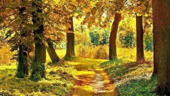 伤感的关于秋天的诗句
