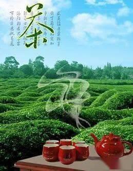 名茶排行榜(最贵的茶叶排行榜)