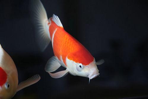 人什么鱼什么成语有哪些