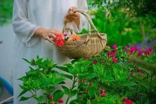 养花的人灵魂带着香气