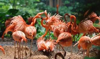 这里世界上好到不行的考拉展区,是长隆野生动物世界考拉的娘家人.