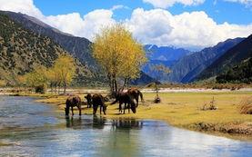 西藏林芝 恍如仙境的世外桃源
