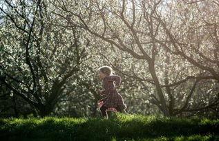 全球多地迎来绚烂樱花季 美景如画 高清组图