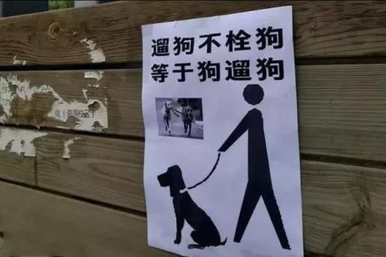"""另一人则表示,遛狗牵绳让狗没有了自由:""""遛狗的"""