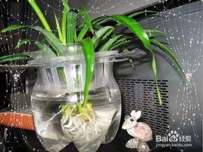 怎样利用空瓶子养花