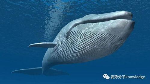 关于鲸的冷知识