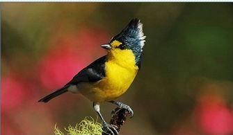有关于鸟的谚语