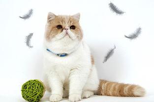 养加菲猫的常识