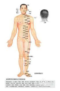 胃经经络图(中医上的胃经是什么)