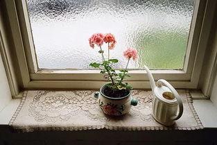爱养花的人会生活的语句